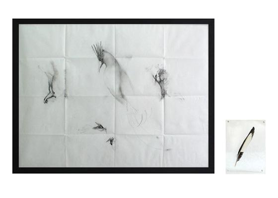 Pájaros en la cabeza.2007.Pencil,bird feather,plexiglass.