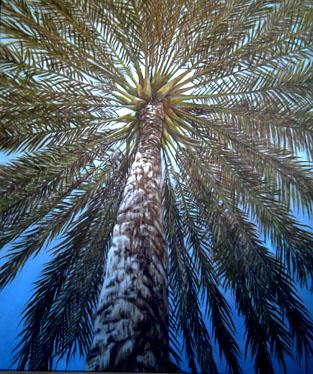 escorzo de palmera, 125x200 cm. 2006