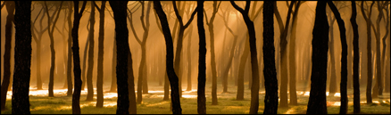 Bosque de Cuatro Vientos