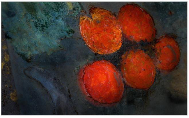 Cino tomates planos