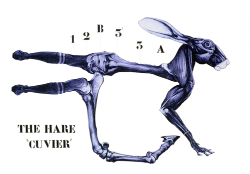 The Hare  (115x170 cm)