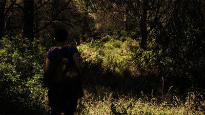 Wald I 2006