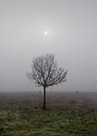 Árbol seco y niebla