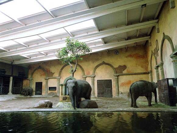 Tres elefantes en Hamburgo Serie Selección Natural