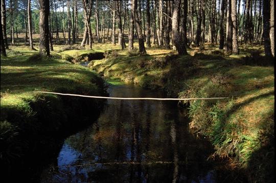 Jorge Barbi. Puente para insectos, 1992. Fotografía, 87x123cm