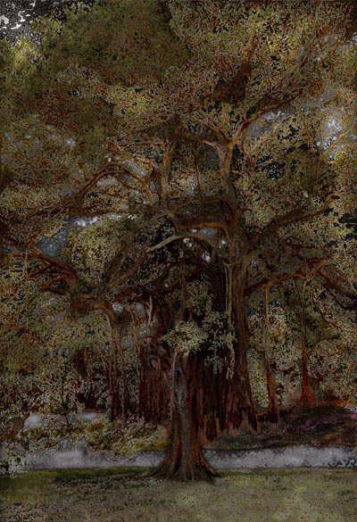 Scenapse 2 (Ficus)