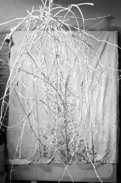 Imagen sin título de: Ses branques des bosc