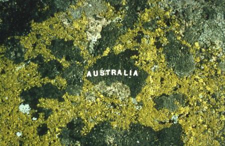 Nina Katchadourian, Australia, Moss Maps, 1993-2007. C-Print. 22 x 30 cm.