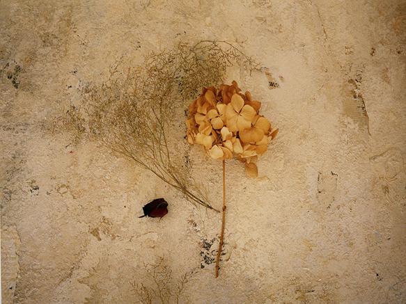 Flores y texturas. Fotografia digital