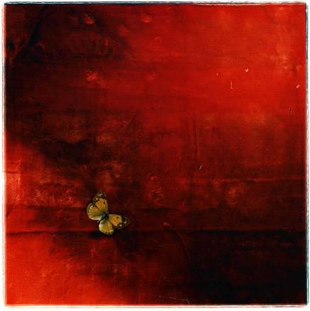 Toni Catany, Natura morta 123