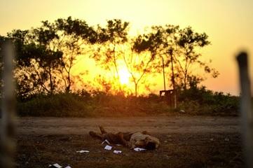Fernando Brito, de la serie Tus pasos se perdieron con el paisaje, 2011