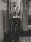 Imogen Cunningham, The Bath 2, 1952