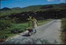 Wilfredo Prieto, Walk, 2000. Cortesía Nogueras Blanchard Barcelona  y Madrid