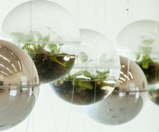 Foto © Biosfera de Joaquín Fargas — Cortesía de Ars Electronica Festival