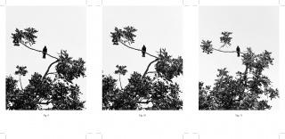 Juan del Junco. Turdus merula, figs. 9-11, 2019. Impresión de tintas pigmentadas sobre papel Canson Infinity Rag — Cortesía de la Galería Isabel Hurley