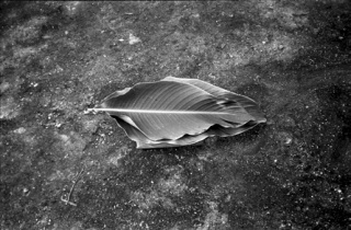 Maruch Sántiz Gómez, No mencionar el nombre de la hoja de bejao al envolver tamales, 1994. Cortesía de la artista. FotoMéxico 2017