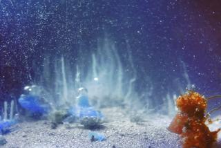 Constelaciones — Cortesía del MUNTREF