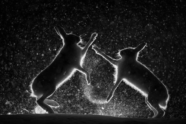 © Erlend Haarberg, Snow spat (European Wildlife Photographer of the Year Competition organised by GDT) — Cortesía de Afundación