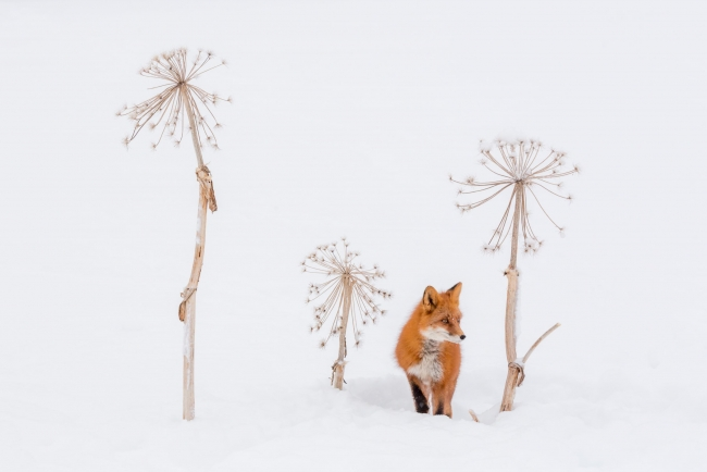 © Denis Budkov, GDT – Winter still life (European Wildlife Photographer of the Year Competition organised by GDT) — Cortesía de Afundación