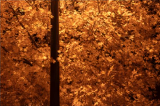 Site 4251- Light Pole and Foliage Oshtemo, Michigan, USA- 6:59pm