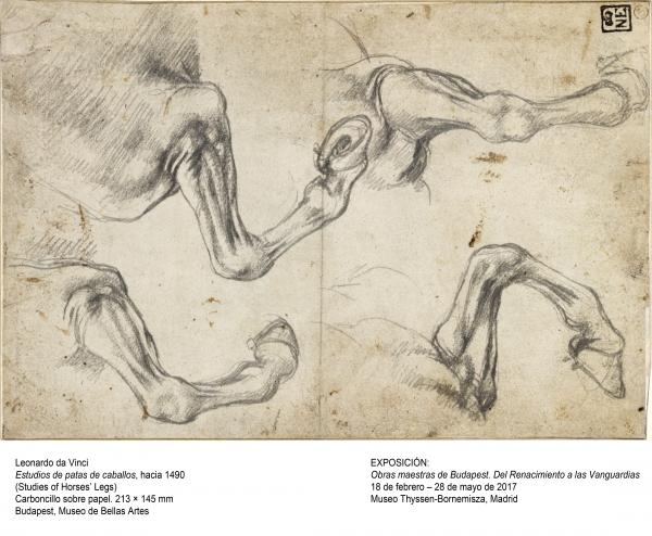 Leonardo da Vinci, Estudios de patas de caballos, hacia 1490. Carboncillo sobre papel, 213x145mm. Budapest, Museo de Bellas Artes