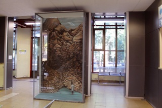 Museo Urbano