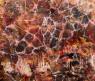 Nogueira de Barros — Cortesía de Óriq - Colectivo Artístico