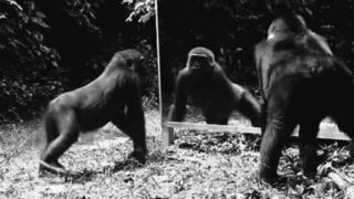 Mono Espejo