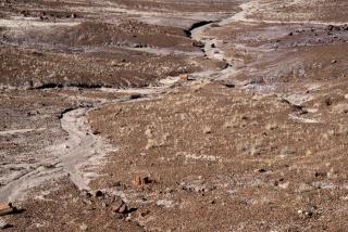 Series Petrified, Untitled #2 (Petrified Forest, Arizona), 2016. Fotografía de Carlos Motta — Cortesía del CDAN