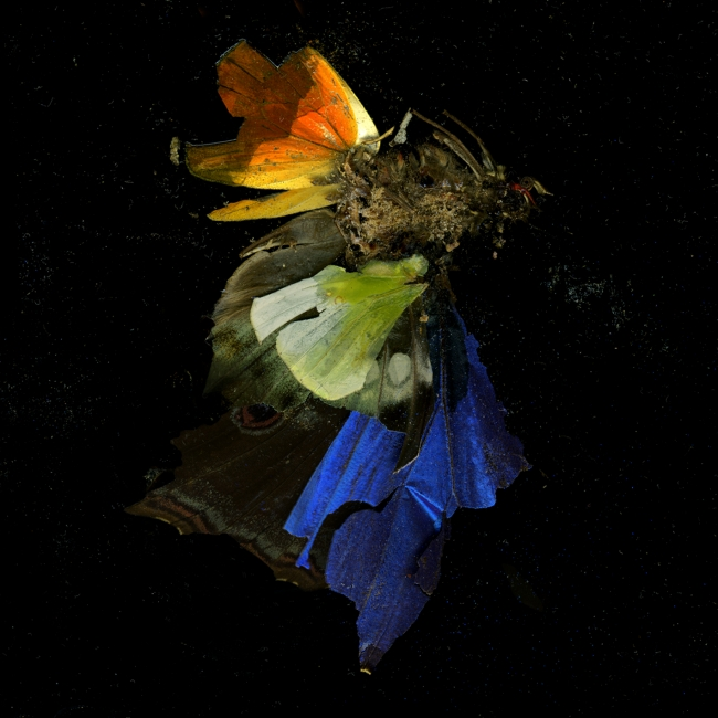 Mat Collishaw, Insecticide 15, 2009. Image courtesy of the artist and BlainSouthern