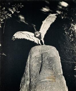 Cercophitecus Icarocornu, de la serie Fauna de Joan Fontcuberta y Pere Formiguera, 1985