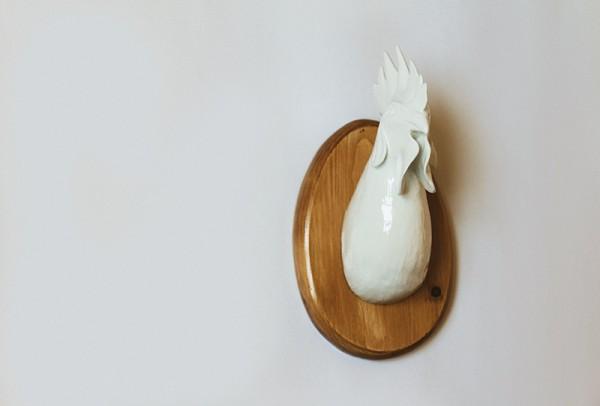Gallo, Paulova