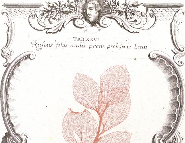 Regnum Vegetabile. La colección Van Berkhey — Cortesía del Real Jardín Botánico