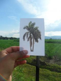 William Narváez, Verdes campos de vida y solaz, 2013. Fotografía, 8 fotos de 50 x 40 cm. c/u