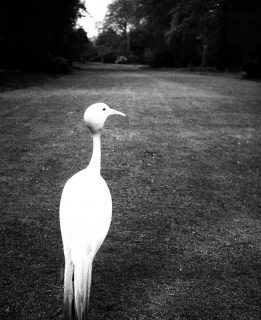 Bill Brandt. Tarde en Kew Gardens, 1932. Evening in Kew Gardens. Private collection, Courtesy Bill Brandt Archive and Edwynn Houk Gallery © Bill Brandt / Bill Brandt Archive Ltd.