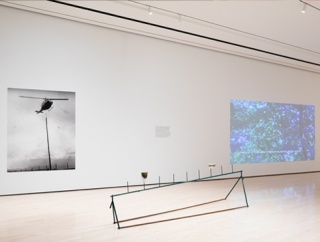 Installation view at the Eli and Edythe Broad Art Museum at Michigan State University, East Lansing, 2020. Photo: Eat Pomegranate Photography. Courtesy of MSU Broad and ICI