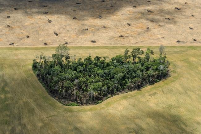 Amazon: Paradise Threatened © Daniel Beltrá – Cortesía de World Press Photo