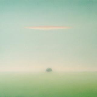 Maurizio Lanzillotta, Encina y nube, óleo sobre lino, 100x100 cm