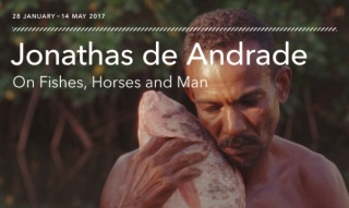 On fishes, horses and man