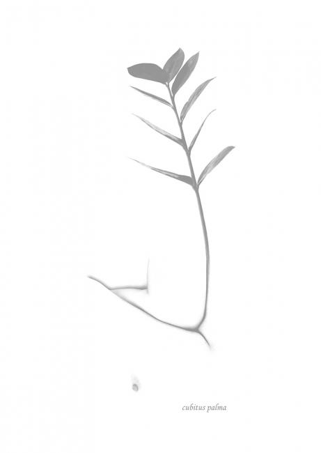 Cubitus palma