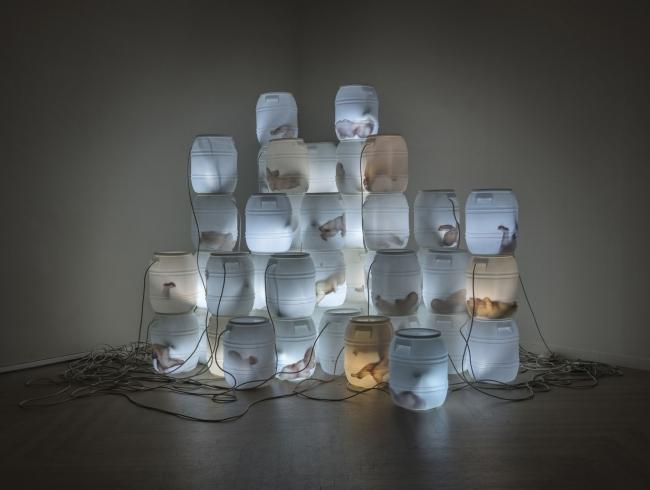 Cuerpos de Luz. Imagen cortesía Marta Mantecón