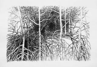 Sylvia Pennings, Ramas y raíces, 2020 — Cortesía de La Casa Amarilla