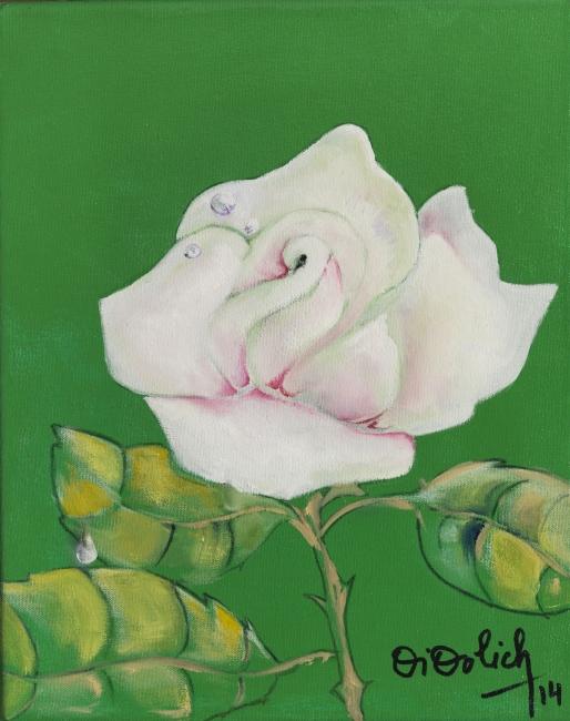 Rosa blanca y rocío