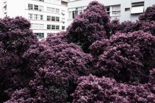 José Damasceno, Infrared Garden, 2018, mineral pigment on cotton paper, 100 x 150 cm. — Cortesía de la Galeria Millan