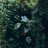 Betata. De la serie Nama Bu. Karen Paulina Biswell. 110 cm x 110 cm. Foto analogica en papel Kodak. 2014