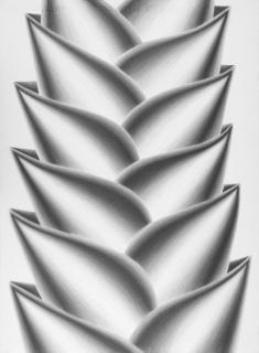 Heliconia lulius, 2012. Lápiz grafito sobre papel 76 x 56 cm