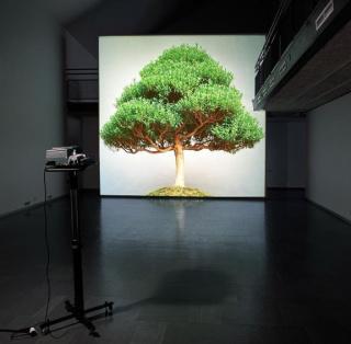 Premio Colección SÛ - Estampa 2021