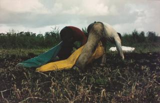 NICOLÁS MARTELLA, Recolectores de papa (A partir de las espigadoras de MIllet), 2005. Fotografía color s/papel, 80 x 125 — Cortesía de la de la Fundación OSDE