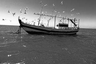 Ed Beltrão    Praia do Forte