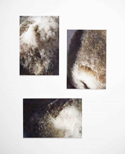 Johanna Arenas, Cartographies I, II and III ,Inkjet print on cotton paper, 45 x 30 cms, 2013